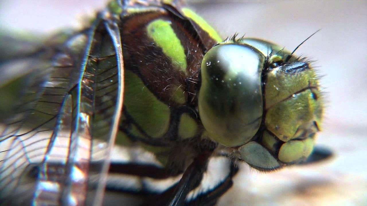 Die Libelle Film