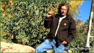 part 2 : Nicotiana glauca, Tree Tobacco, Michael Cottingham, Southwest Herbalist