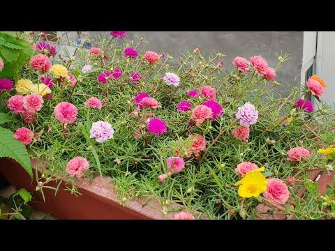 Flowers In My Garden || My Today's Blooms || Fun Gardening