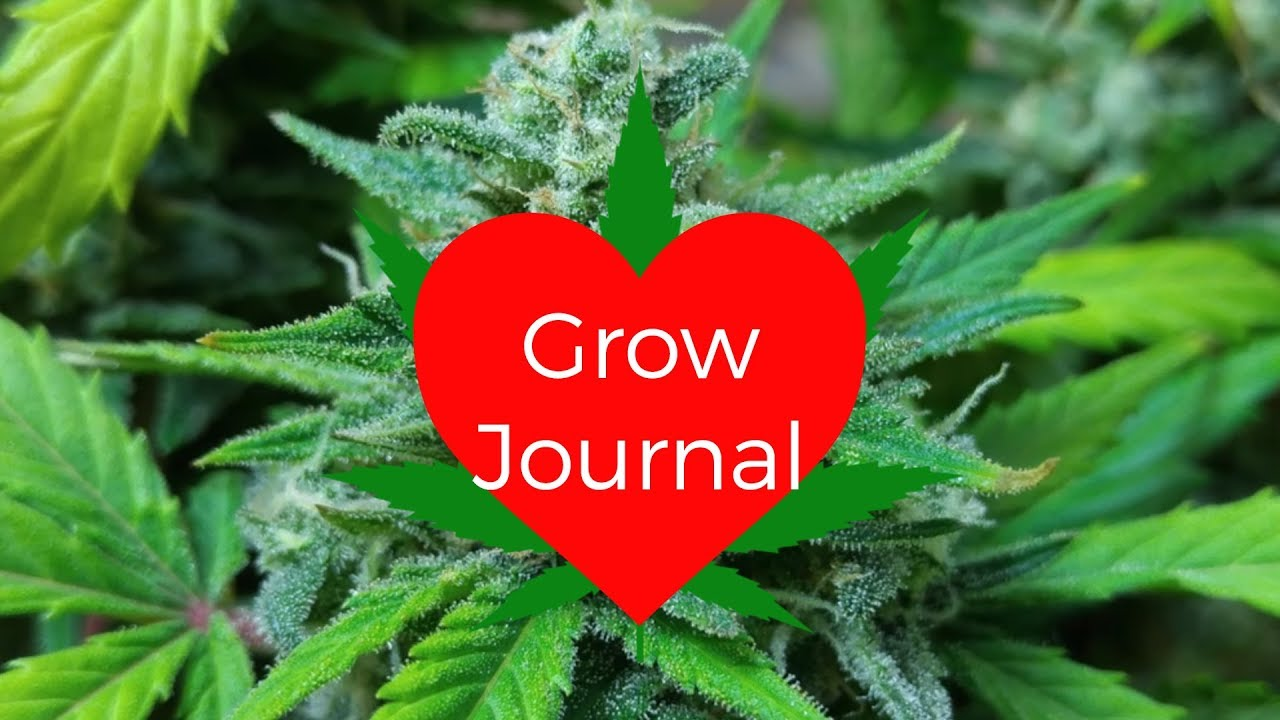 Grow Journal First grow with DIY Cylindrical Grow Tent & Grow Journal: First grow with DIY Cylindrical Grow Tent - YouTube