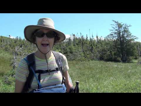 Viking Tour: Bonne Bay Newfoundland