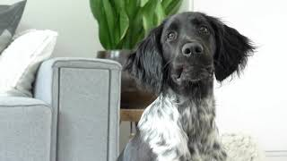 Promo puppy opgroeibox