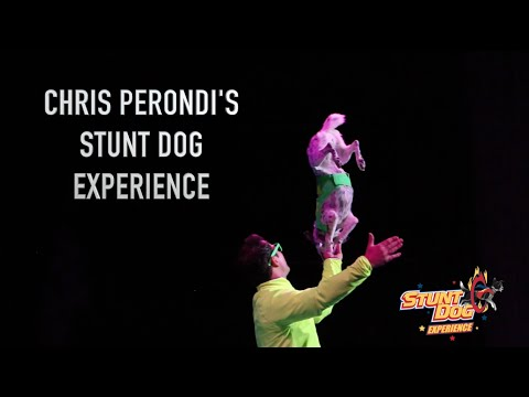 Stunt Dog Experience (The world's first and #1 Stunt Dog Show)