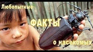 Любопытные факты о насекомых