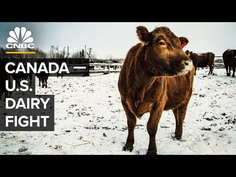 How Canada Helps Its Dairy Farmers (And Why Trump Hates It)