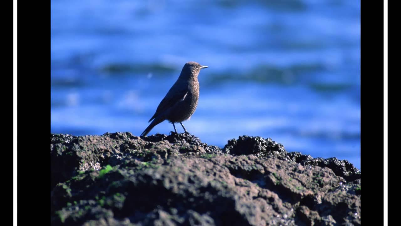 Звуки природы и птиц скачать бесплатно