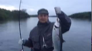 10-е вересня річка Велика. Риболовля на кижуча