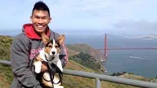 Corgi Puppy Explores San Francisco - Life After College: Ep. 347