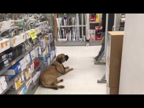 Staying calm in a hardware store | Perfect Companion K9