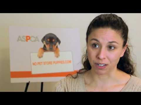 What Is A Puppy Mill?