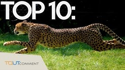 Top 10 animaux les plus rapides du monde / top 10 fastest animals on earth