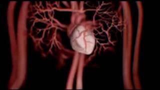 Влияние алкоголя на организм человека(Социальная реклама Первого канала. Полная режиссёрская версия., 2009-02-20T10:44:38.000Z)