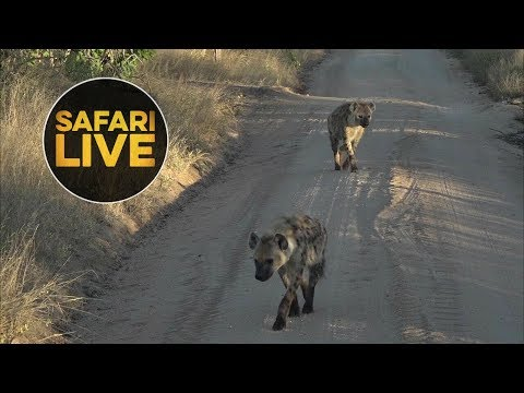 safariLIVE - Sunrise Safari - June 7, 2018