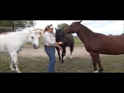 Dogs vs horses for AAT