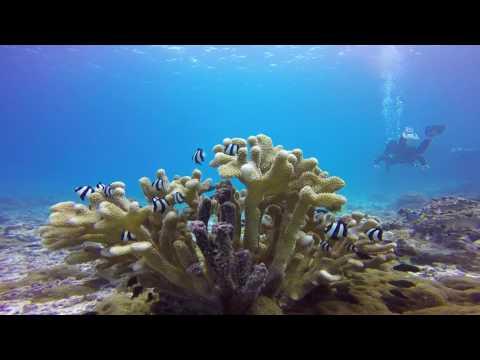 Palmyra Atoll- 2016