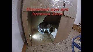 😻ОГРОМНЫЙ ДОМ ДЛЯ КОТЕНКА Своими Руками 🐱Котенок в коробке 🐱 Видео про котят