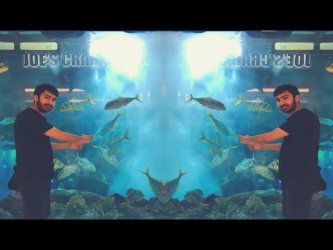 Full tour of Dubai Mall Aquarium in 4k | Travel with Shahid
