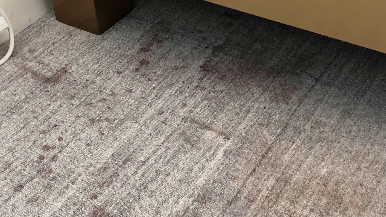 How To Remove Stains From Wool Carpet Youtube