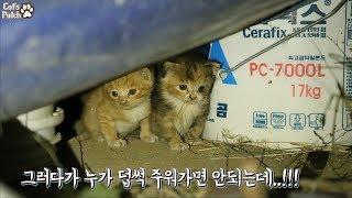 길고양이가 새끼를 키우는 방법은? 감귤이의 생생 육묘현장!