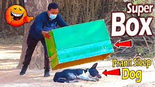Big Box vs Real Dog Prank Very Funny With Surprise Scared Reaction  Try Not To Laugh Prank Video