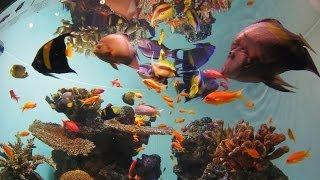 山下達郎氏の『踊ろよ、フィッシュ』に乗せて、 2013年の葛西臨海水族園のとある日をスライドショーにしてみました。