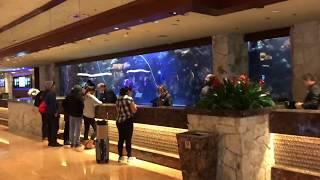 Mirage Hotel Walk Through | Full Tour of the Mirage Hotel on the Vegas Strip