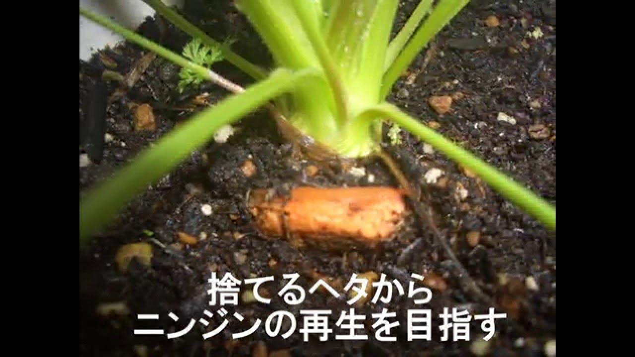 栽培 ニンジン