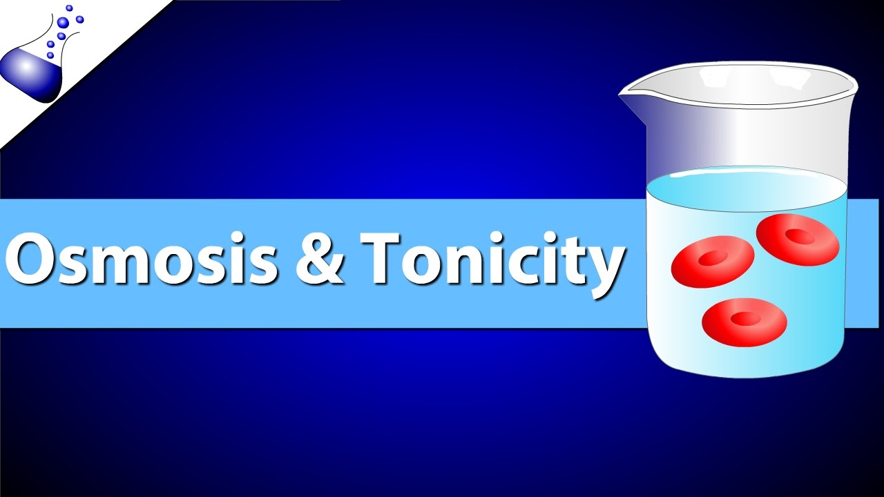 worksheet Tonicity And Osmosis Worksheet osmosis and tonicity youtube tonicity