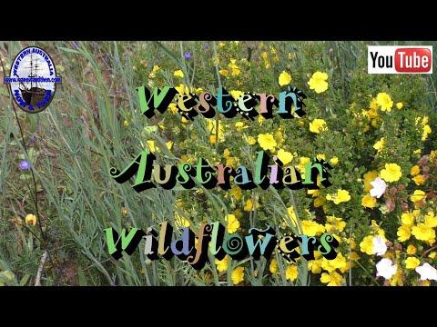 Western Australian Wildflowers - K / L