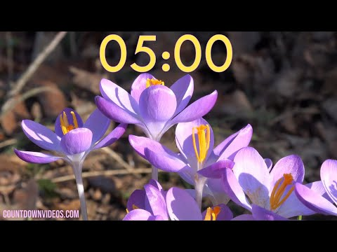 5 minute Spring Timer With Music ? Bee and Crocus Flowers?