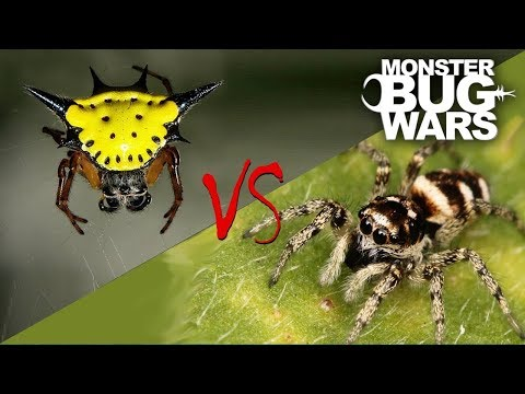 spiders vs insects