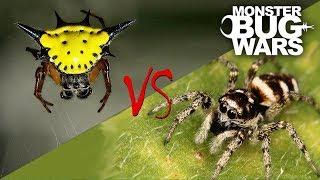 Spider vs Spider Showdowns #6-8 | MONSTER BUG WARS thumbnail