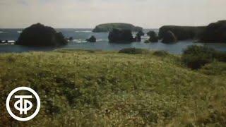 Есть такой остров 1976