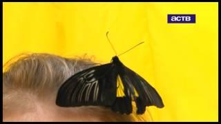 В Сахалинском краеведческом музее можно увидеть самые редкие виды бабочек