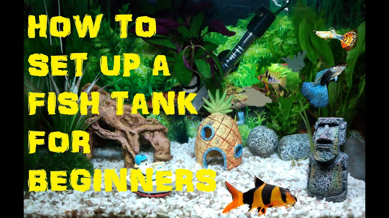 how to set up a freshwater fish tank aquarium for beginners youtube