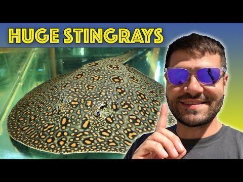 Abyss Aquariums, Australia Tour Part 5