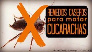Eliminar cucarachas con bicarbonato muy eficaz sin - Remedios para eliminar cucarachas ...