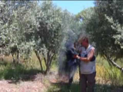 Illegal songbird trapping on Cyprus - CABS spring 2009 report (limestick, bird, police, poaching)