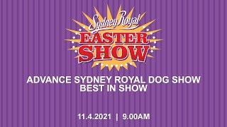 ADVANCE Sydney Royal Dog Show  Best in Show