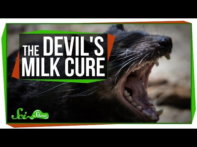 Using Devil's Milk to Kill Superbugs