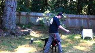 Meet Zach Of Sit Means Sit Dog Training Portland