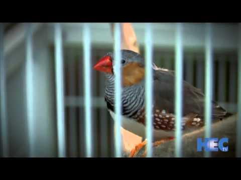 "Download HEC-TV ""Innovations"" segment on zebra finch genome"