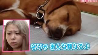 ぺこちゃんのスッピン公開!!ペコ&りゅうちぇる.