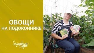 Растим овощи на кухне осенью и зимой. Огород на подоконнике!