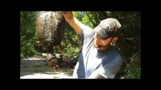 East Texas Creek Hunting Snapping Turtle,broadband Water Snake,fajitas & A Broken Arrowhead.