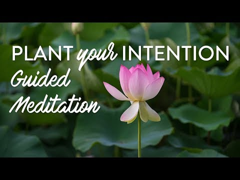 Plant Your Intention | Guided Meditation