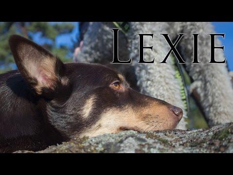 Lexie the rescue