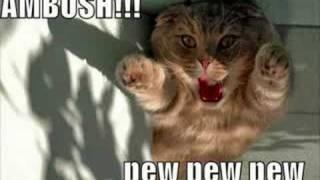 Funny Kitty Kats !!