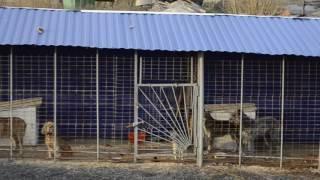 Приют для животных в Новочеркасске