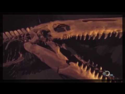 National geographic - T Rex of the Deep - BBC wildlife animal documentary